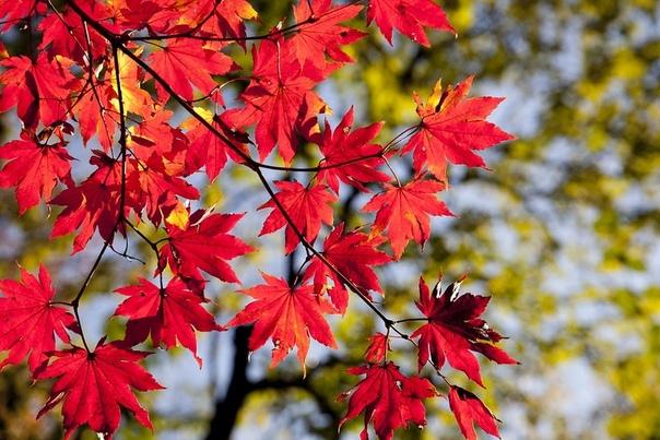 Люблю я осень