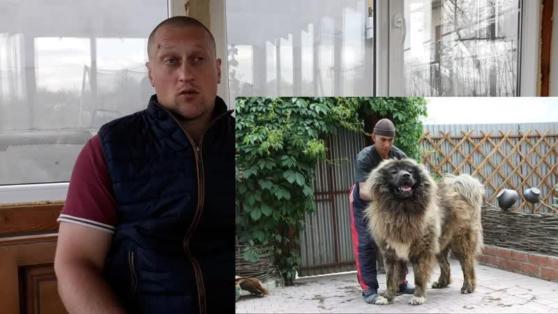 Какая собака круче Алабай VS Кавказская Овчарка. Какую собаку лучше купить для охраны двора