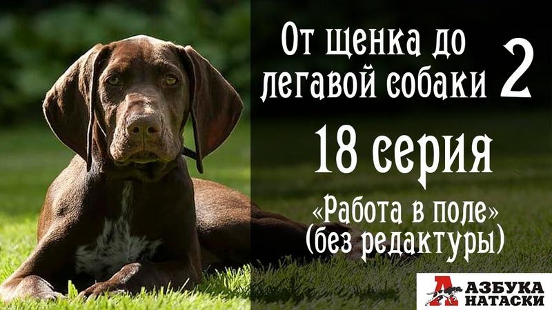 От щенка до легавой собаки 18 серия Работа в поле после корректировок