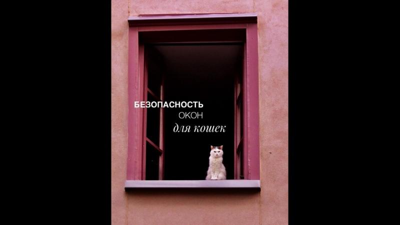 Безопасность окон для кошек