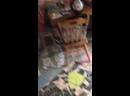 Видео от Ирины Красницкой