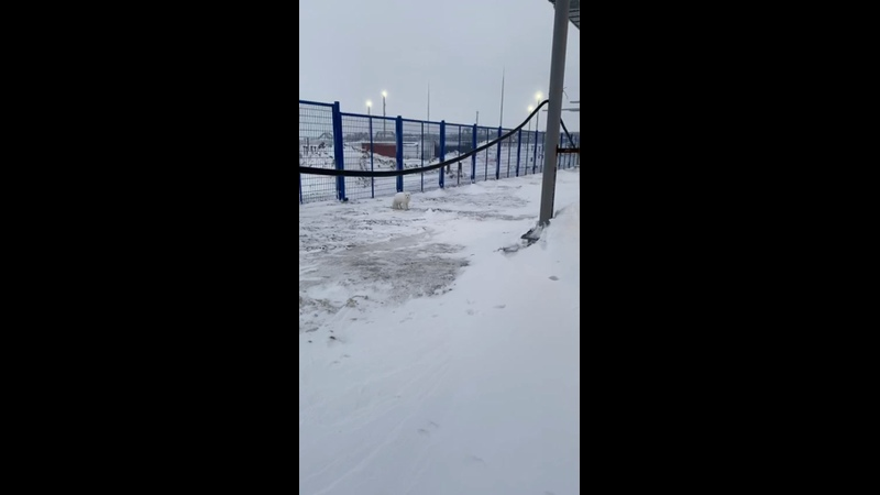 Видео от ЗАО Трест СЗЭМ