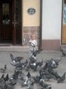Свєта Ридель, Дрогобыч, Украина