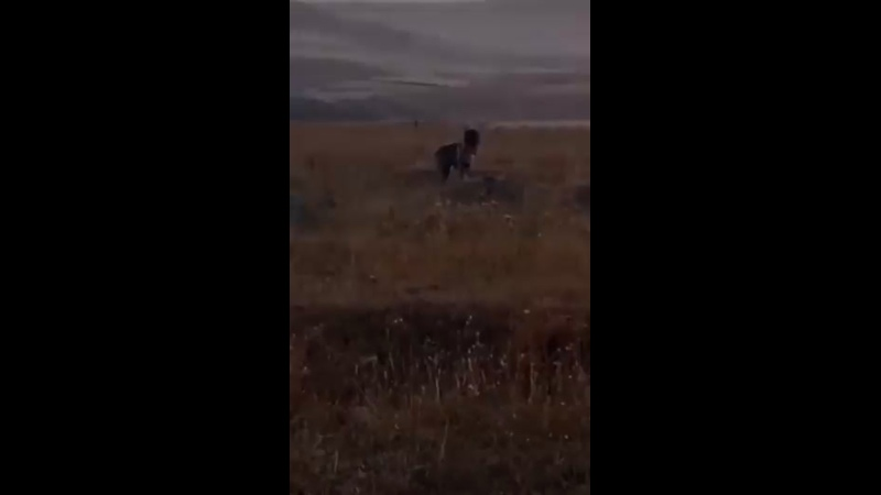 Азерские ублюдки увидели собаку и выстрелили по ней