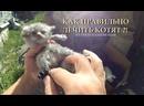 ИЗ ГРЯЗИ В КНЯЗИ выпуск 149 как правильно лечить котят Кошкин дом