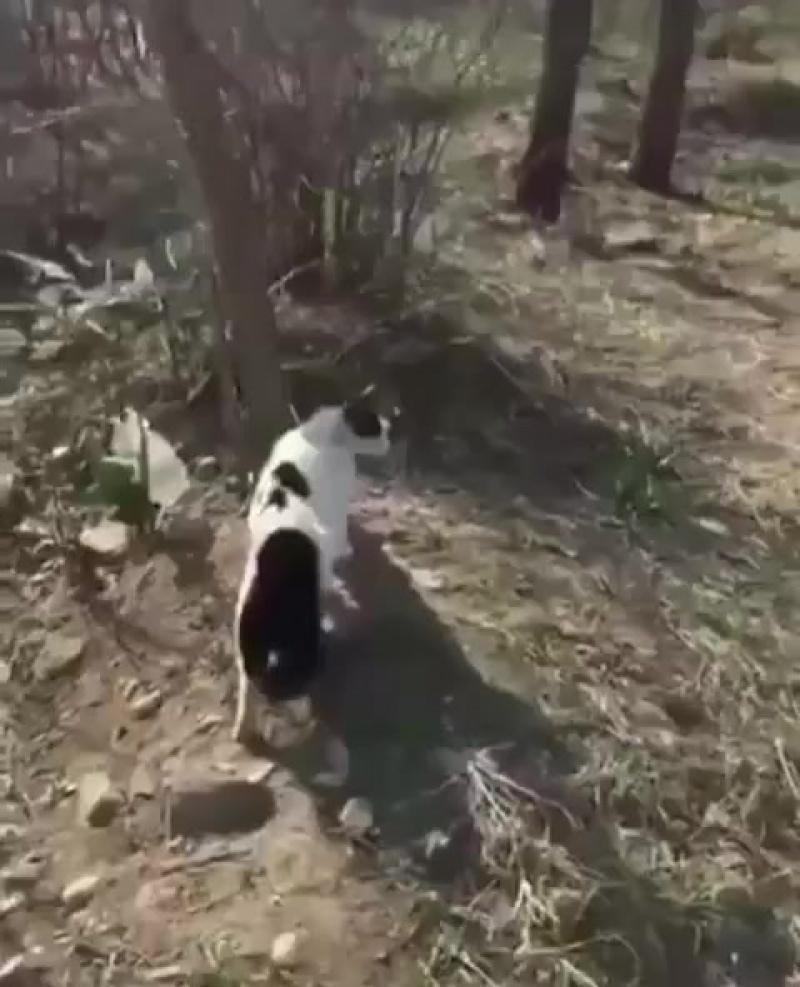 Собакен опиздюрился от банды котэ )))