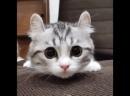 Глаза кота из Шрека
