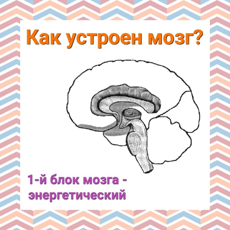 Структурно функциональная девушка модель работы мозга лурия работа для девушек краснодар в контакте