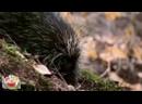 Дикие животные. Развивающее видео для детей по методике Домана. HD качество.