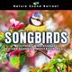 Звуки природы - Птичье пение
