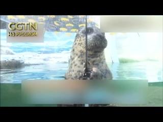 В океанариуме японского города Такамацу тюлень научился держать зонт
