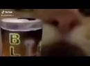 ебанутый кот пьет пиво пиздец блять