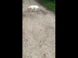 Video by КИНОЛОГ/ДРЕССИРОВКА/МОСКВА и ОБЛАСТЬ
