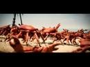 Танец крабиков на пляже