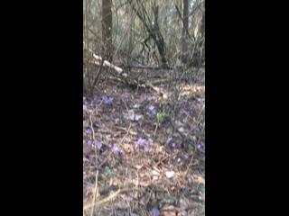 Весна в лесу. г. г.Волковыск.Беларусь. +18*