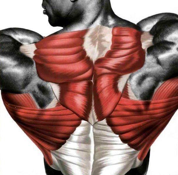 Супер-спина: упражнения для каждой области