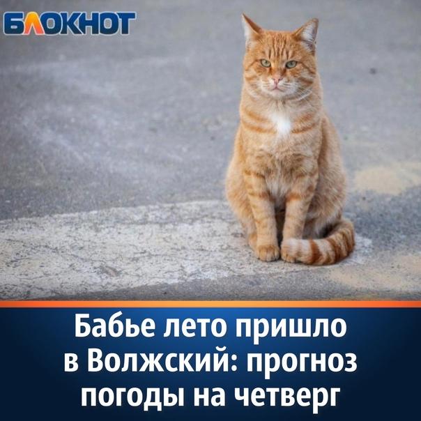 В четверг, 14 октября, ранним утром в Волжском синоптики ...