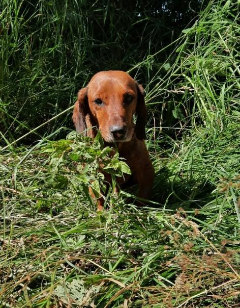 Здравствуйте пропала собака в раёне верховинки зов...