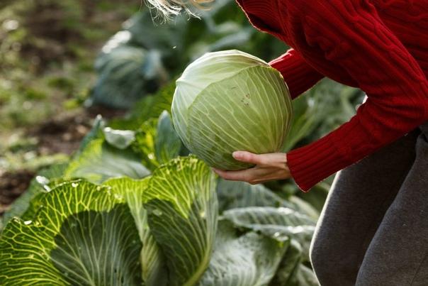 🍂 Осень - время собирать урожай.Порядка 43 тысяч т...