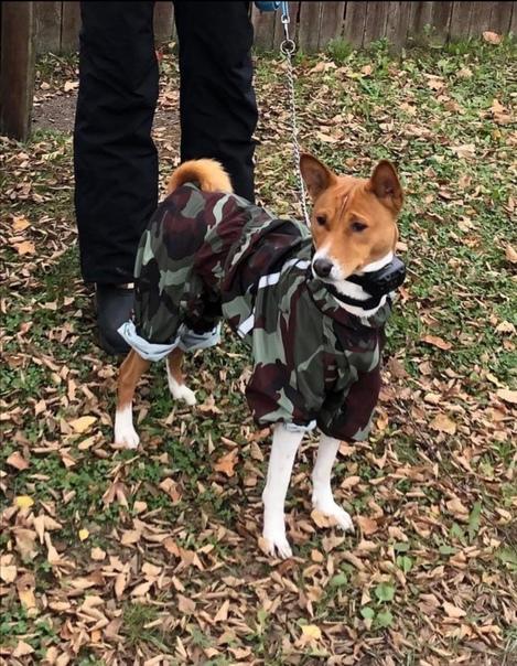 Пропала собакаПес убежал в районе д. Кошелово.Поро...