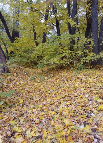 Осенний лес прекрасен! Курск