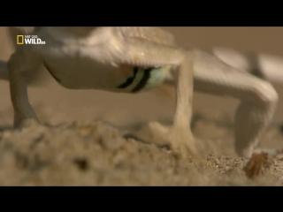 Непокорная Мексика. Быстрый и мертвый [02 из 02] (2018) HDTV 1080i