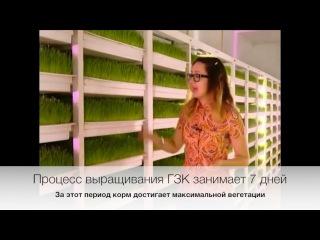 Гидропонный зеленый корм (с комментариями)