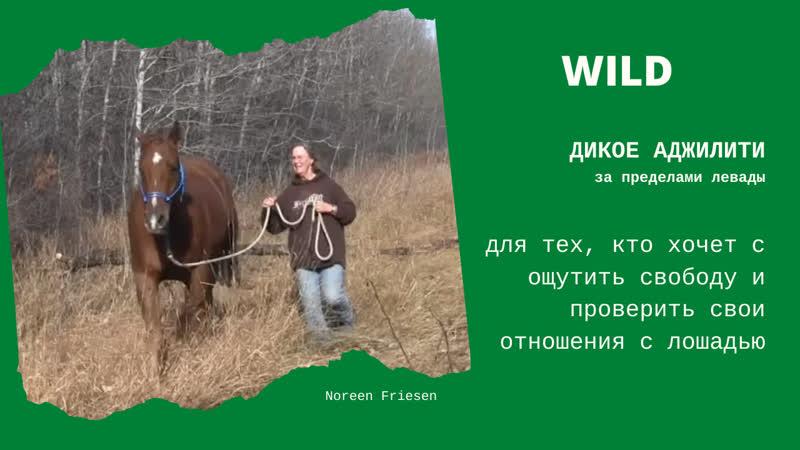 Wild horse agility за пределами конюшни пример