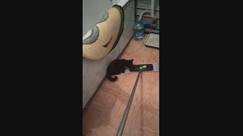 Котя-помощник