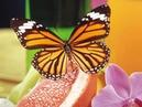 В мире животных. Бабочки