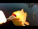 Coole Videos 365 🐠🐟 Fütterung Der Fische / Feeding the Fish ✪ Stern DuTube