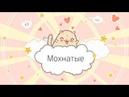Мохнатые, Усатые и Полосатые! 😉 Приют Дружок Липецк Кошки и Коты Песенка про кошек