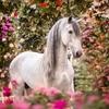 """"""" Рай на земле – у лошади на спине. """" (с)"""