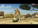 Короткий смешной мультик про льва 1.2 Лев и Гепард