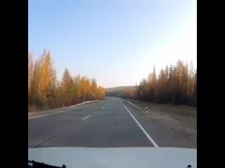 Лось выбежал на дорогу перед едущим автомобилем