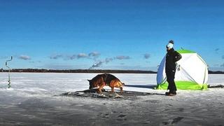 НА ЛЬДУ С СОБАКОЙ. Зимняя рыбалка в ПАЛАТКЕ С НОЧЁВКОЙ. Ищу леща #231