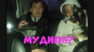 Cобака в Яндекс Такси / надо ли платить за перевозку животного?
