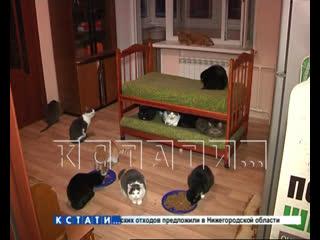 Люди со всей России откликнулись на последнюю просьбу тяжело больной создательницы приюта для животных