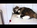 Кот играет на диване