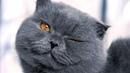 Смешные кошки и коты Приколы с кошками Лучшие до слез